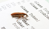 Why are Bug Tracking Systems Needed for Mobile Testing, Desktop Testing and Web Site Testing?